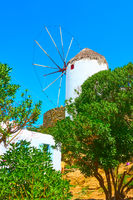 Old windmill and olive garden