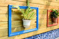 Green plant hanging in the middle of colorful painted photo frame on pallet wall