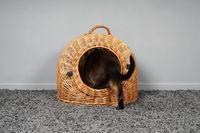 rear view of cat climbing into wicker basket