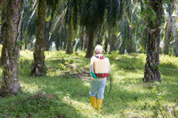 Palm oil and worker.