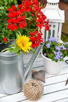 Gartendekoration mit roten Geranien und einer Gießkanne Werkzeug von oben