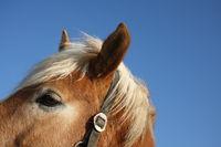 Pferdeportraet