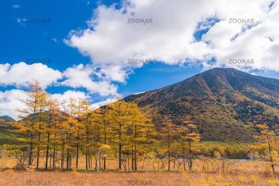 Autumn Fall Landscape Nikko Japan