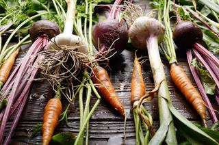 Vegan background of fresh organic beetroots green garlic and carrots