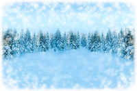White Christmas greeting card background. Snowfall forest landscape with copy space. Winter landscape with fir trees covered with snow. Soft toned