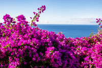 violette Bougainvillea mit Meer, purple Bougainvillea and ocean
