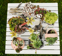 verschiedene Hauswurzpflanzen in Töpfen und Kannen