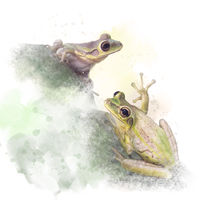 Tree Frogs watercolor on white background