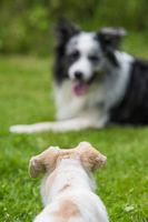 Hunde liegen sich gegenüber