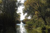 Flusslandschaft am Rhin