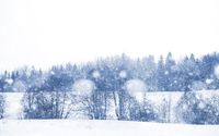 Landscape in the winter day