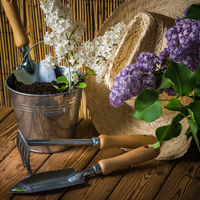 Gardening tools and a branch of a blossoming white lilac