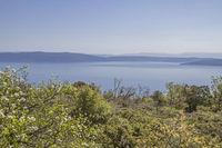 Auf der Halbinsel Koromacno in Istrien