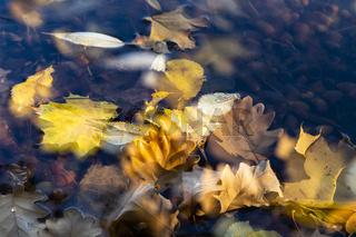 Herbst: Blätter auf dem See