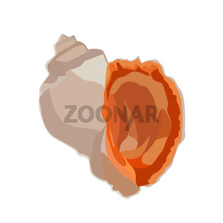 Beautiful rapana venosa shell icon isolated on white background, mollusk clam seashell, vector illustration.