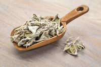 dry Greek sage herb (fascomilo)