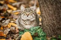 Little Kitten near the Tree