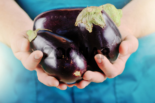 Farmer hold fresh organic eggplants in his hands. Vegetable harvest concept