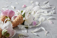 Summer flowers - fresh gentle pink and white peony in a wafer cones with petals on a gray background.