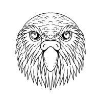 Kakapo Owl Parrot Head Drawing Black and White