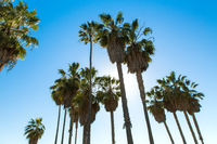 palm trees over sky at venice beach, california