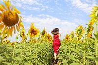 Brunette woman running in sunflower field