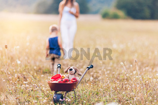 Happy mother and her son outdoors in a field