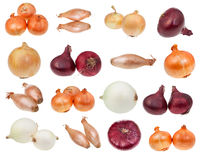 various bulb onions isolated on white