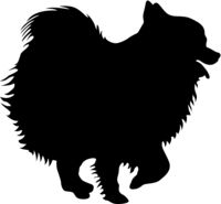 Spitz dog silhouette on a white background