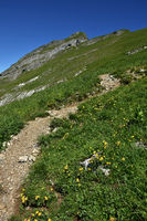 Kanisfluh im Bregenzerwald bei Mellau; Wanderpfad zum Gipfel