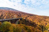 Jogakura Ohashi Bridge Autumn Japan