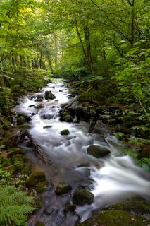 Mountain river - stream flowing through thick green forest, Bistriski Vintgar, Slovenia