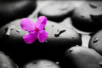 Wet pebbles with flower background wallpaper