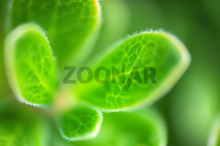green plants of mountain litter