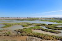 Ile de Ré salt lakes