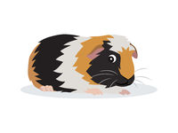 Cute friendly guinea pig icon isolated on white background, small fluffy rodent pet, vector illustration