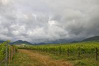 Regenwolken über der Südpfalz