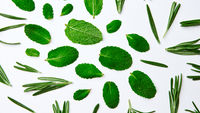 Green pattern from mint leaves and rosemary on a white background. Natural background. Flat lay