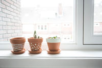 Room flowers on the windowsill. Cactuses in cozy pots on the windowsill.