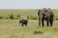 Elephant mother and baby, Maasai Mara, Kenya, Africa.