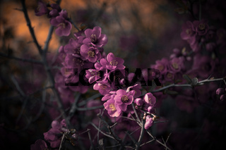 pink blossoms on bush in dark ambience
