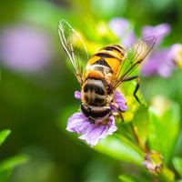 Bee eating pollen