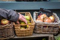 Elderly man picking up fresh fruits