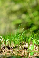Green growing grass close-up