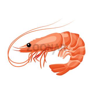 Shrimp icon in flat style, fresh sea food.