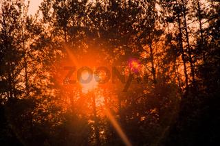 magic evening light in the woods