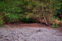 folgen der langanhaltendes Trockenheit im Sommer 2018 im Harz ausgetrocknete Bäche und Flüsse