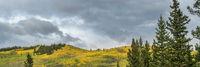 fall colors at Kenosha Pass in Colorado