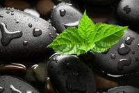Black wet pebbles with green sprout background