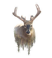 Deer and Forest. Watercolor Double Exposure effect